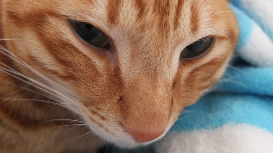 SDTF – My Catz